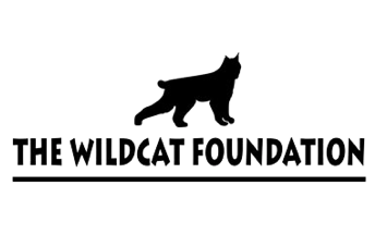 Wildcat Foundation